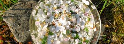 03 f formation fleurs de bach